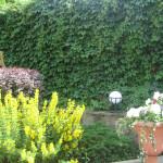 озеленение лианами