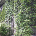 Вертикальное озеленение дома